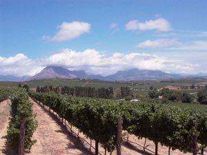 249691_winery_-_wine_route_1.jpg