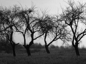 439964_scary_trees_1.jpg