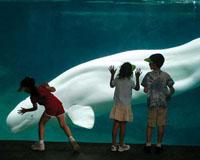 Aquarium-poi-ajasaro.jpg
