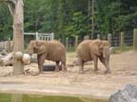 Zoo-poi-ajasaro.jpg