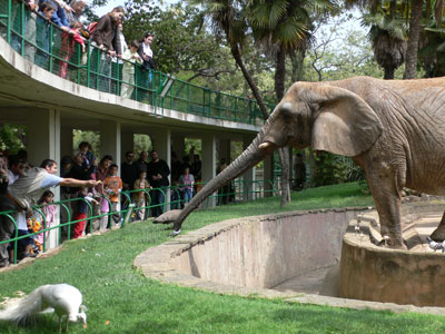 how zoos help animals