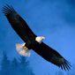 eaglesft's picture